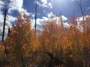 Catching the peak of Fall Foliage in the Sierra Nevada – Lake Tahoe